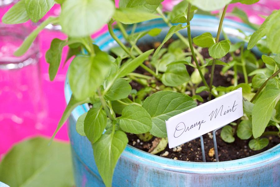 mayflowersmint